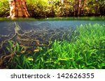 Below The Water Of A Mangrove...