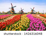 Tulip Fields Of Various Colors...