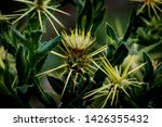 nature flower and plants with... | Shutterstock . vector #1426355432