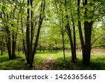 forest trail   footpath.... | Shutterstock . vector #1426365665