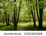forest trail   footpath.... | Shutterstock . vector #1426365668