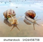 Snails At Sunset. Loving Two...
