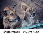 close up stray dogs  life... | Shutterstock . vector #1426954655