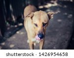a stray dog  alone life waiting ... | Shutterstock . vector #1426954658