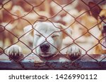 close up a stray dog  alone... | Shutterstock . vector #1426990112