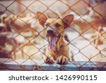 close up a stray dog  alone... | Shutterstock . vector #1426990115