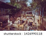 stray dogs  life waiting for... | Shutterstock . vector #1426990118