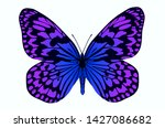 beautiful violet and blue... | Shutterstock . vector #1427086682