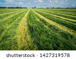 Small photo of Making silage grass. Freshly cut silage in the meadows of the Netherlands near the city of Oudewater. Multi-cut Silage production. Farmland with grass and cows. Inkuilen van gras