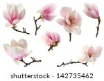 Small photo of decoration of few magnolia flowers