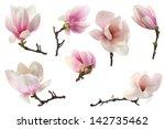 Decoration Of Few Magnolia...