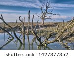 Dead Trees On Porlock Marsh...