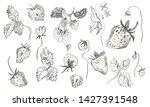 set of strawberries drawn in...   Shutterstock . vector #1427391548