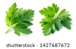 Parsley. Parsley Isolated....