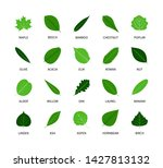 useful leaves colored natural... | Shutterstock .eps vector #1427813132