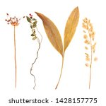 Set Of Herbarium Wild Dry...