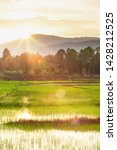 A Tranquil Rice Paddy Field At...