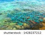 Multi Colored Fish. Feeding...