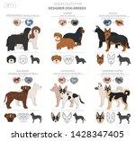 designer dogs  crossbreed ... | Shutterstock .eps vector #1428347405