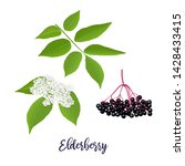 elderberry with twig  berries ... | Shutterstock .eps vector #1428433415