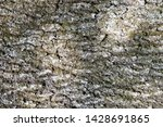 Abstract Backgrounds  Bark Of...