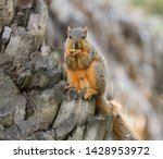 A Small Brown Squirrel With A...