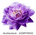 Peony Flower Purple On A White...