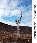 lone dead tree with blue... | Shutterstock . vector #142904305