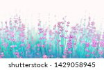Border Of Lavender Flowers On...