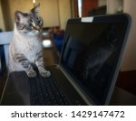 Stock photo cat paws on the keyboard the cat presses paw on the keyboard keyboard computer 1429147472