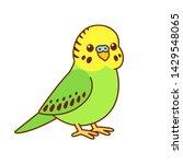 cute cartoon budgie drawing.... | Shutterstock .eps vector #1429548065