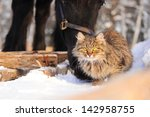 black horse and cat friends in... | Shutterstock . vector #142958755