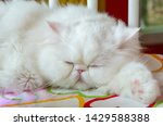 Blurred White Persian Cats Are...