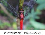 Stock photo a dragonfly perched on a green tree 1430062298