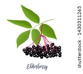 black elderberry with twig ... | Shutterstock .eps vector #1430311265