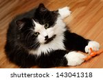 Stock photo big adult cat playing with a toy 143041318
