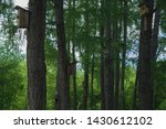 nesting boxes hang on tree... | Shutterstock . vector #1430612102