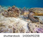 A Turtle Swims In A Reef