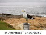 tagged seagull in plettenberg... | Shutterstock . vector #143070352