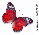 Stock photo red butterfly isolated on white background 143077375