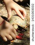 Stock photo elongated tortoise in the nature indotestudo elongata tortoise sunbathe on ground with his 1431003032
