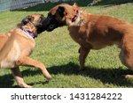 yuma sector  ariz.   us   april ...   Shutterstock . vector #1431284222