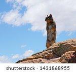 A Mama Desert Squirrel Stands...
