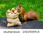 Squirrel Eats Nuts On The Stump ...