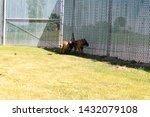 yuma sector  ariz.   us   april ...   Shutterstock . vector #1432079108