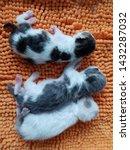 Stock photo  new born kittens sleeping on the orange soft bedding 1432287032