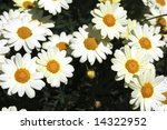 white flowers | Shutterstock . vector #14322952