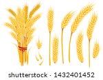 Set Of Wheat Yellow Ripe...