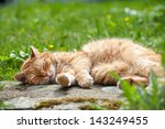 Stock photo red domestic cat lying in a meadow 143249455