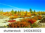 autumn nature steppe landscape... | Shutterstock . vector #1432630322
